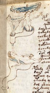 voynich-manuscript-page-143-detail-2